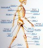 poster-humanbody1-s